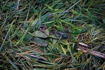 Bevroren grasland van Jenco van Zalk