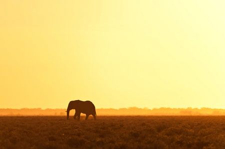 Elephant looking for water