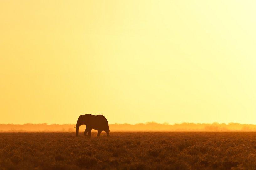 Elephant looking for water van Damien Franscoise