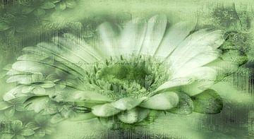 Gerbera grün, mit Text von Rietje Bulthuis