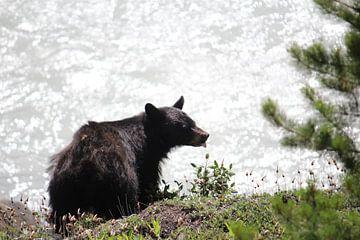 zwarte beer van
