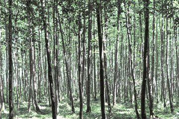 Schöner Wald von Miranda van Hulst