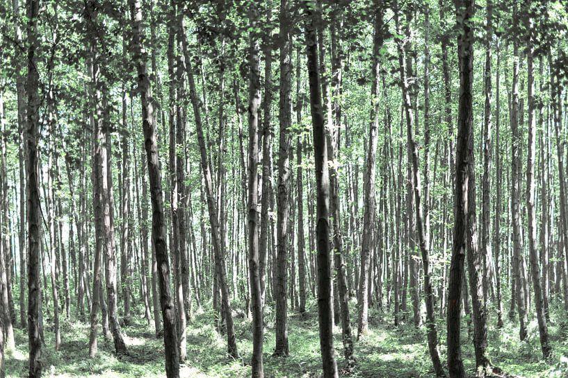 Une belle forêt sur Miranda van Hulst