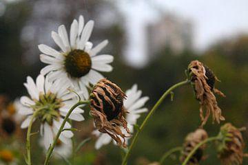 Bloemen in de herfst van Isabel van Esch