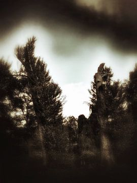 Bomen van Elo Mars
