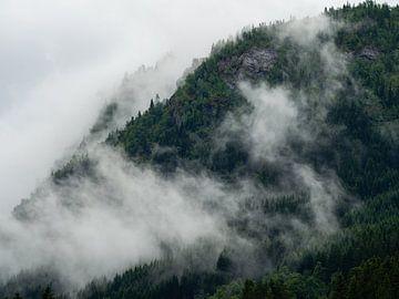 In Wolken gehüllte Kiefern in Norwegen von Teun Janssen