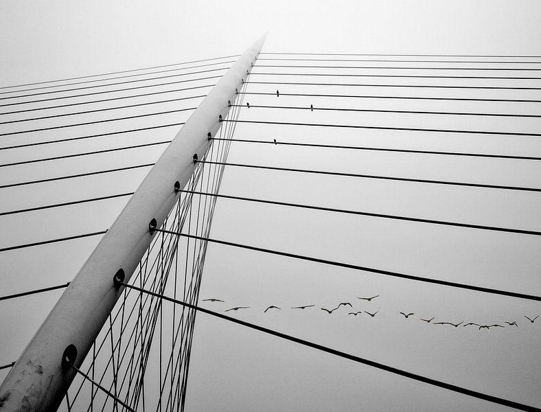 Calatrava Bruggen van Fons Bitter