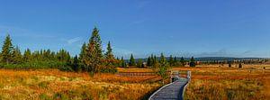 De weg naar de rode heide