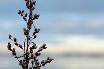 winterse eenvoud van Danielle Bosschaart