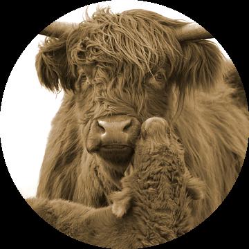 Schotse hooglander moeder met kalf sepia van Sascha van Dam