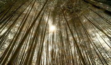 0620 Bamboo forest - Remix van Adrien Hendrickx