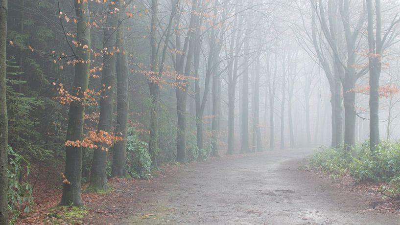 Beukenlaan in de mist van Art Wittingen