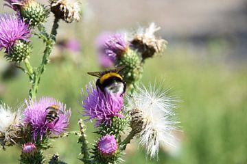 bijen en stuifmeel van Marcel Ethner