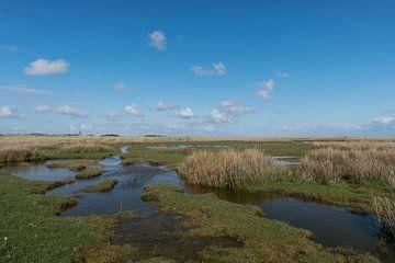 Kwelder landschap op Schiermonnikoog
