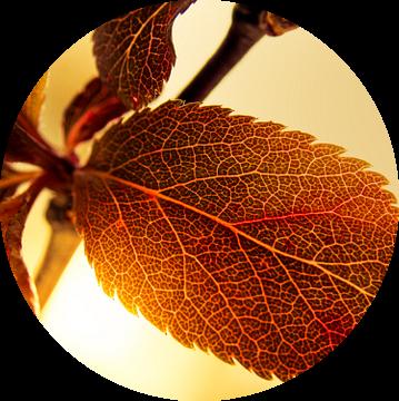 Blad in het Zonlicht / Bloem / Bloemblaadjes / Bladnerf  / Nervatuur/ Bruin / Oranje / Rood / Geel / van Art By Dominic