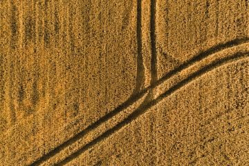 Luftaufnahme eines Getreidefeldes mit Traktorspuren von Marjolijn Maljaars
