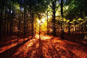 Herfst Tafereel van