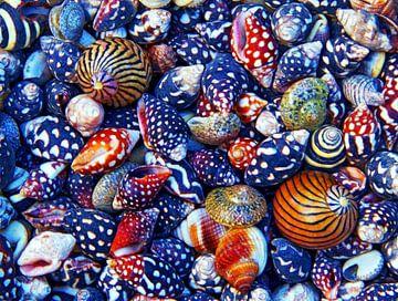 Snail-City (Schelpen en Slakkenhuizen) van Caroline Lichthart