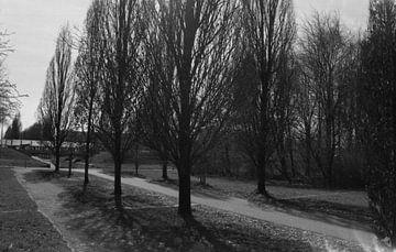 Bomen aan een weg van Melvin Meijer