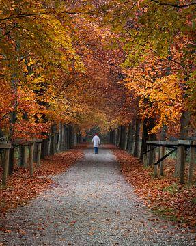 Herbstlicher Spaziergang von Koen Sachse