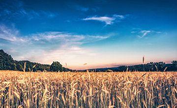 Sommer an der Familien Farm - Getreidefelder am Bauernhof in Lubkowo von Jakob Baranowski - Off World Jack