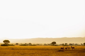 4 herten op de savanne van het prachtige Oeganda van Laurien Blom