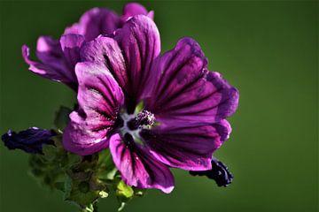 Blumenfreude von Ramona Peter