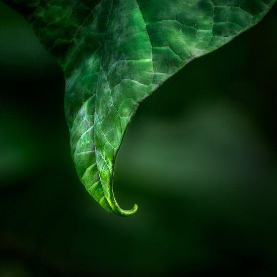 Another variation in green van Ruud Peters