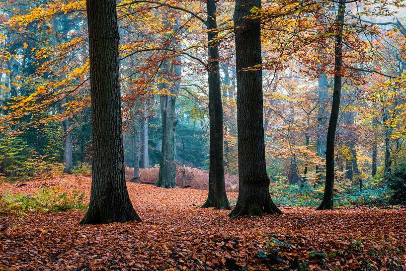Autumn Trees van William Mevissen