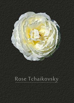 Rose Tschaikowsky von Leopold Brix
