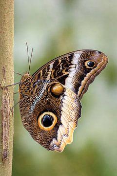 Vlinder aan de tak sur Wim van der Wind