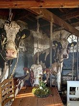 Klantfoto: De koeien van boer Klein van Inge Jansen