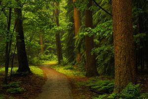 Meanderen door het Speulderbos. Meander through the Speulderbos.