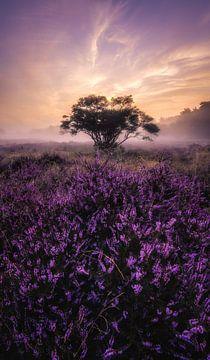 Heide zonsopkomst_I van Joris Pannemans - Loris Photography