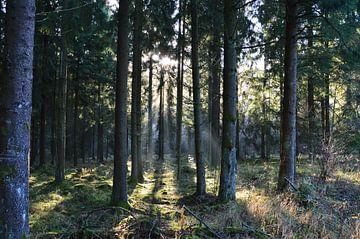Im Wald von Susanne Seidel