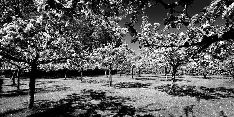 Boomgaard, Nederlands landschap (zwart-wit) van Rob Blok