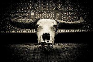 Indonesië - buffelschedel van