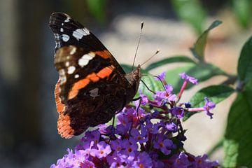 Vlinder van Gerdine Aret