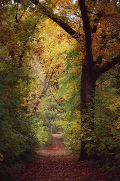 Herbst-Pfad von Alvin Aarnoutse