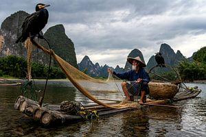 Poisson aux cormorans sur Michael Bollen