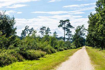 Naturschutzgebiet 'Elmpter Schwalmbruch' Schwalmen 1 von Bart Stappers