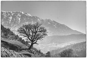 Eenzame boom van Bob Timroff