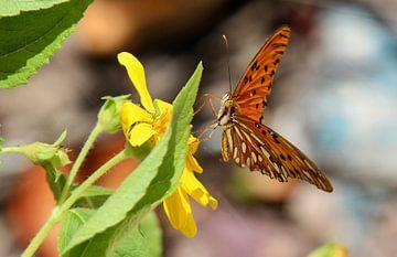 Schmetterling von Bert Weber