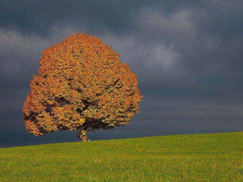 Herbstlicher Baum vor Gewitterstimmung von Andreas Müller