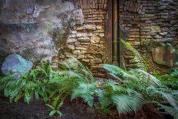 Die Natur übernimmt von Frans Nijland