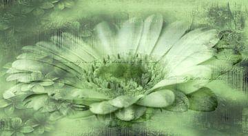 Gerbera groen, met tekst van Rietje Bulthuis