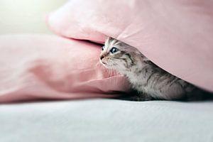 Nieuwsgierig jong poesje verstopt onder roze kussen