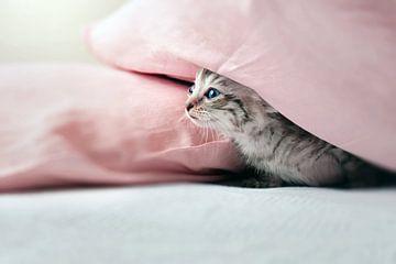 Nieuwsgierig jong poesje verstopt onder roze kussen  van Christa Thieme-Krus