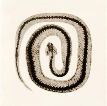 Snake van David Potter