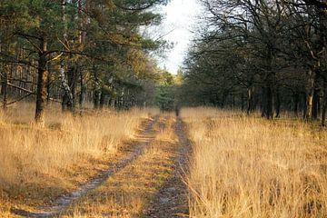 Enjoy the road van Iris Lobregt